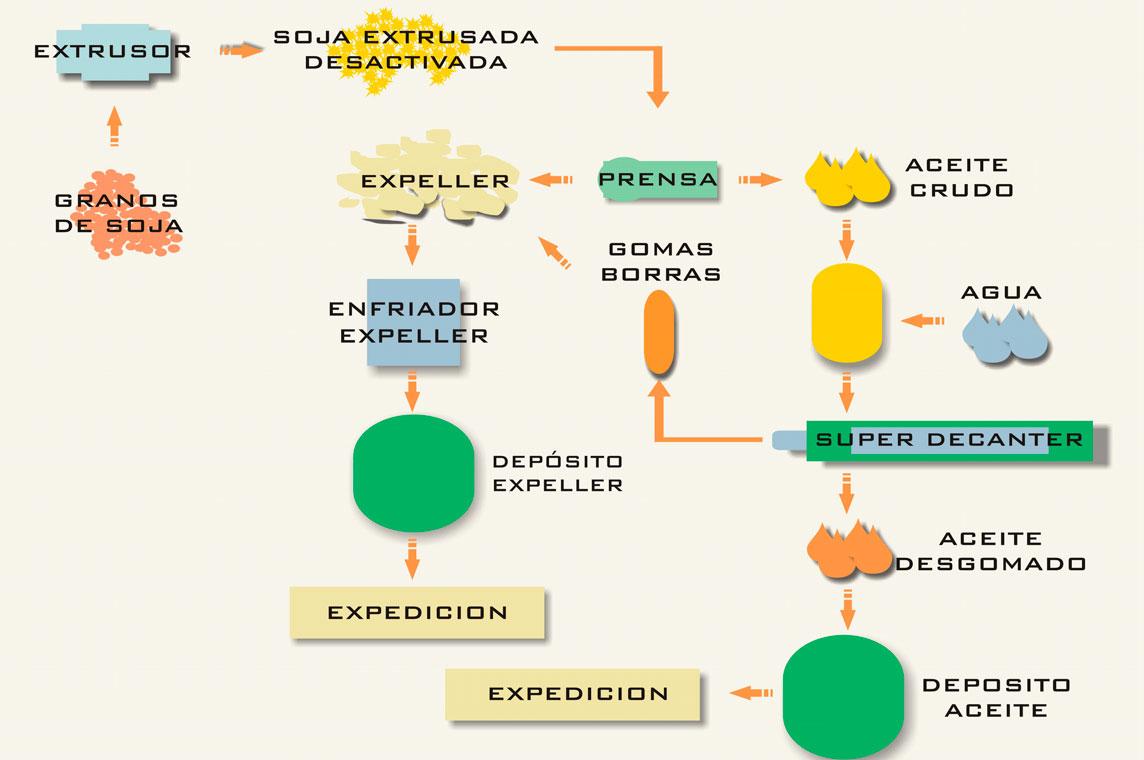 biocinetic descripcion de procesos